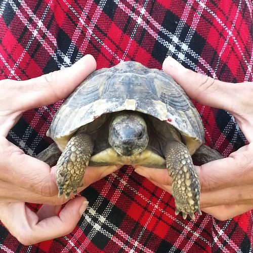Low section of person holding turtle with hands