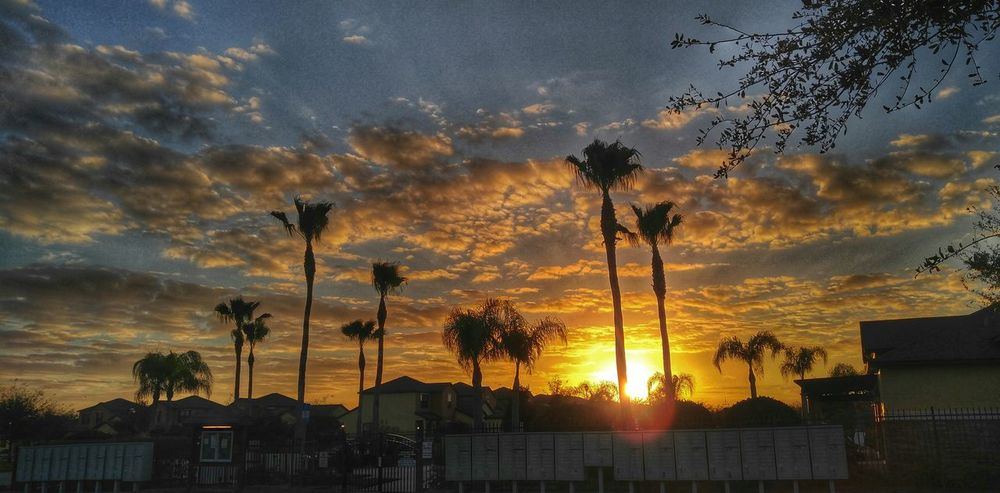 Luminary Circle Magic Hour Sunset Silhouettes Sunset #sun #clouds #skylovers #sky #nature #beautifulinnature #naturalbeauty #photography #landscape Resortlife Beauty In Nature Cloud - Sky Scenics Clouds And Sky Sunset_collection Sunsetporn Palm Trees Resort Living