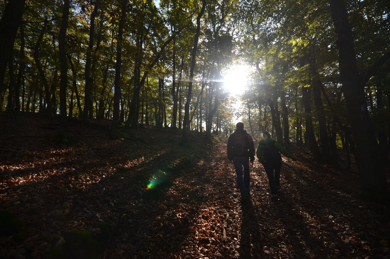 tree, forest, nature, walking, rear view, real people, two people, growth, the way forward, full length, togetherness, sunlight, day, outdoors, men, beauty in nature, tree trunk, people