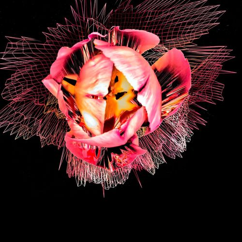 Petals Creative Digital Art Flower Art Tulip Glitchè Photo Manipulation Artistic Photography Photo Editing Rebelpunk Funky Art Photography Creative Photography Digitalart  Photomanipulation Contemporary Art Grid Lineart Cool Glitchexhibition Red Red Flower Scotland Tulips