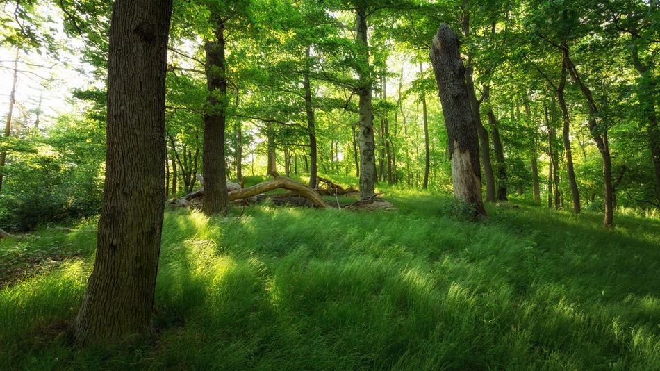 EyeEm Nature Lover EyeEmNewHere Animal Themes Beauty In Nature Branch Day Forest Grass Green Color Growth Landscape Nature No People Outdoors Scenics Tranquil Scene Tranquility Tree Tree Trunk Wald Waldlandschaft WoodLand