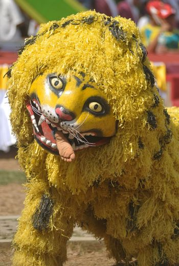 Singo singoan Yellow Day Outdoors Portrait Close-up Animal Themes People Art Cultures Traditional Festival Arts Culture And Entertainment Jawa Timur Banyuwangi INDONESIA Nikon Tradition