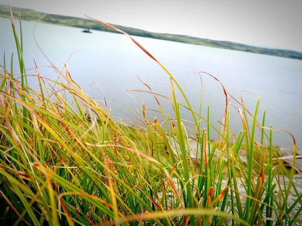 Russian Altaiski Krai Nature Belokurikha EyeEm Nature Lover White Lake Kolyvan Water Lake Rural Scene Sky Plant