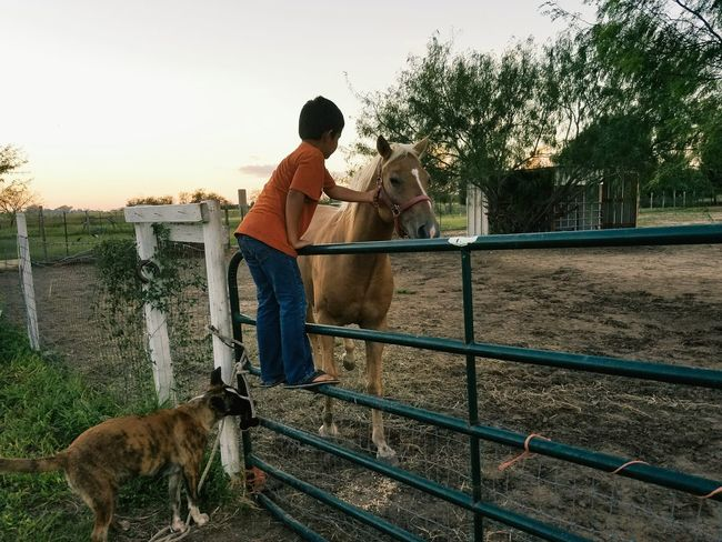 Mammal Horse Full Length Young Adult Casual Clothing Sky Person Boy Dog Tree Pets Outdoors Day Herbivorous Farm Country Farm Boy Lens Flare Sunbeam Place Of Heart This Is Family This Is Latin America
