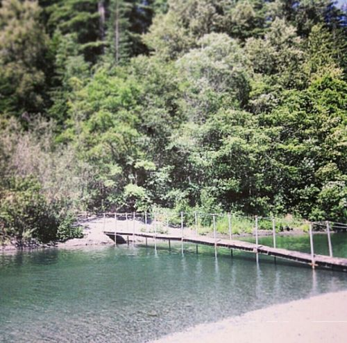 California Redwoods In North California River Greenery Peaceful