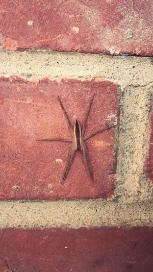 Spider Creepy Crawlers Cool Looking Brick Wall Hanging Out Love Spiders Insect Photography Insect Photo Spiders