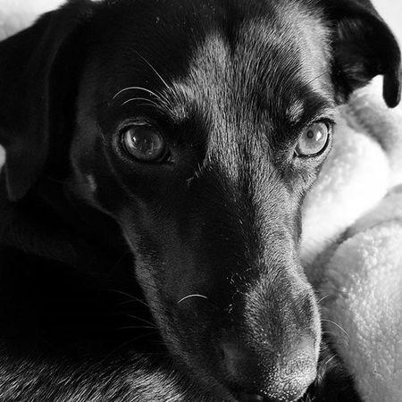 Dog Dogeyes Dogmodel Doginstagram Instadog Photodog Dogphoto Doginsta Pies Piesinst Bestdogmodel Majapies Maja