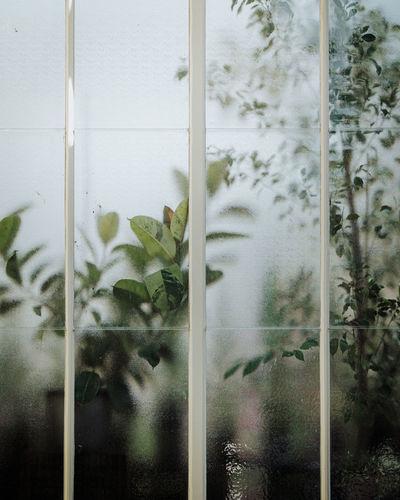 Full frame shot of flowering plants seen through glass window