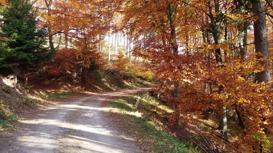 Tree Nature Day Outdoors Beauty In Nature Autumn Colours Of Nature Colour Of Autumn Road Band Hungary Írottkő