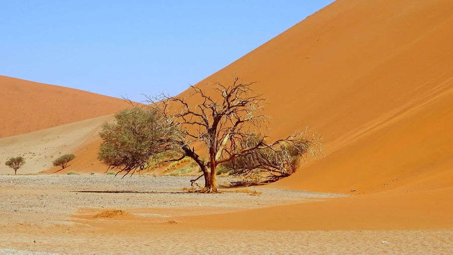 Namibia Sossusvlei Sossusvlei Desert - Namibia Sand Landscape Nature Tranquility Arid Climate Tranquil Scene Sand Dune Clear Sky Tree Beauty In Nature Scenics Bare Tree Desert Sky Day Outdoors No People Blue