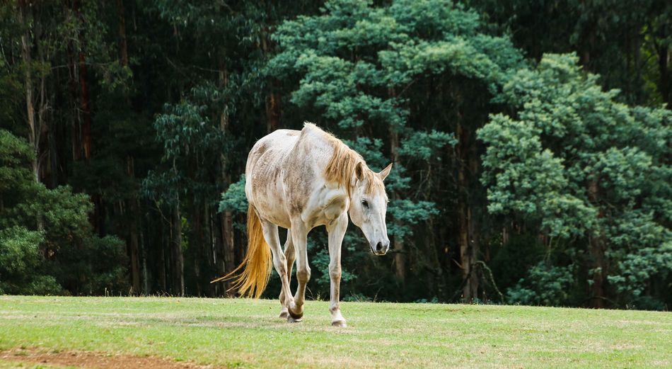 Horse walking on field against trees
