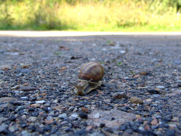 Close-Up Of Snail On The Road