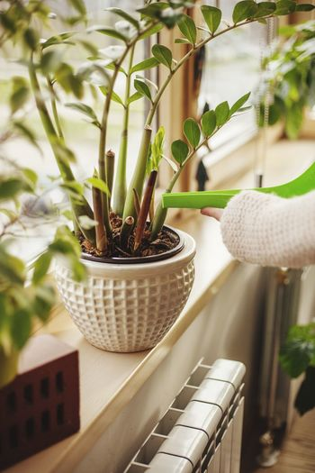 Cropped Hand Watering Potted Plants On Window Sill