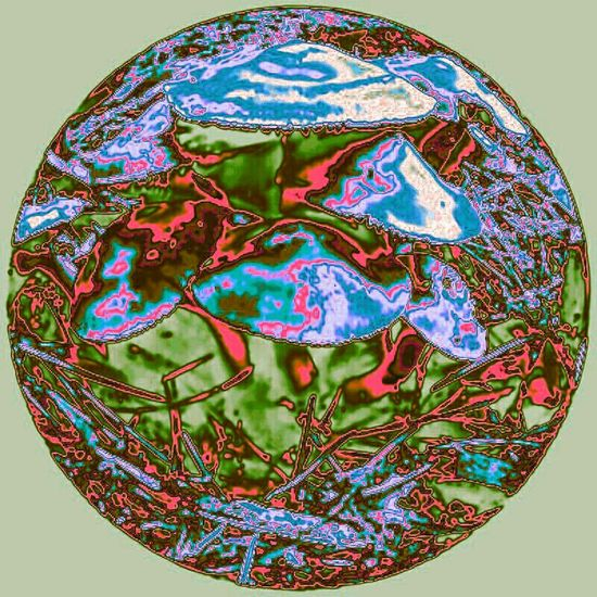 Abstract Psychedelic Mushrooms Popart Kunst