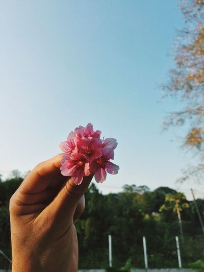 #flower #simple #greatful Human Hand Flower Flower Head Tree Holding Sky Close-up First Eyeem Photo