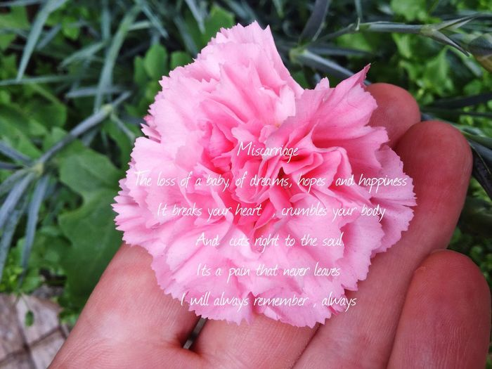 Human Hand Human Body Part One Person Real People Human Finger Holding Pink Color Personal Perspective Unrecognizable Person Focus On Foreground Petal Close-up Day Outdoors Beauty In Nature Flower Head Lifestyles Flower Nature Fingernail Miscarriage Miscarriage Awareness