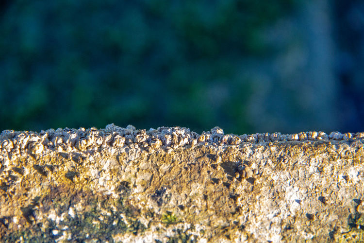 Close-up of a reptile on the rock