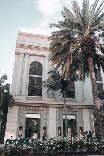 Low angle view of palm trees and building