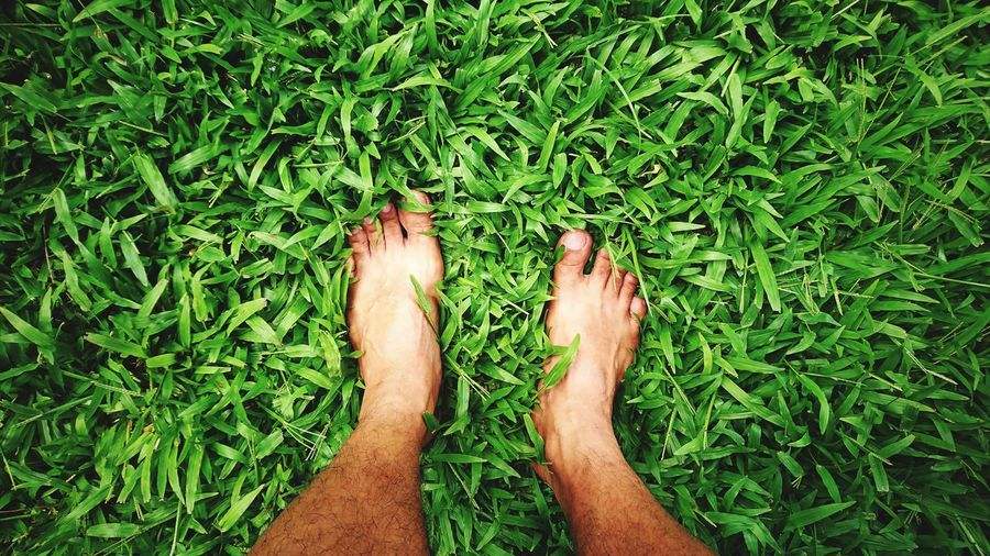 From Where I Stand Green Color Grass Low Section Standing Human Leg Men barefoot High Angle View Grass Green Color Human Foot Personal Perspective Human Feet Toenail Human Toe Toe