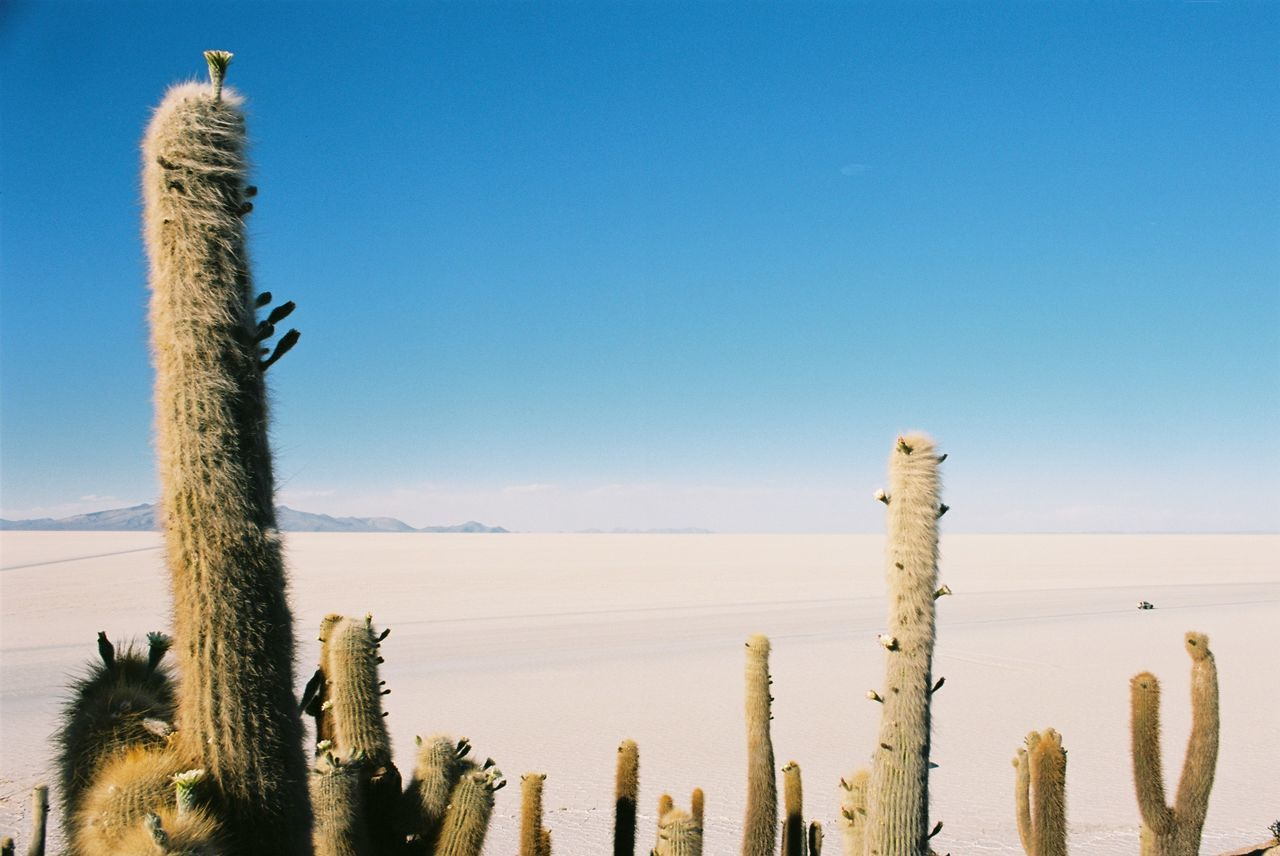 sky, cactus, succulent plant, clear sky, plant, scenics - nature, tranquility, nature, land, beauty in nature, copy space, tranquil scene, no people, blue, growth, non-urban scene, saguaro cactus, day, desert, remote, arid climate, climate, post, wooden post, outdoors, salt flat, ecosystem
