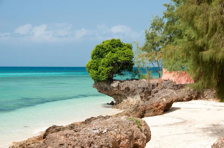 Prison Island - Zanzibar - Tanzania Beach Beauty In Nature Prison Island Rock Sea Shore Tranquility Tree Zanzibar