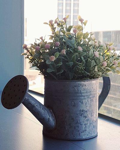 Flower Beauty In Nature Beauty No People Window Nature Naturelovers EyeEm Nature Lover Njoylive Hello World Enjoying Life Beautiful