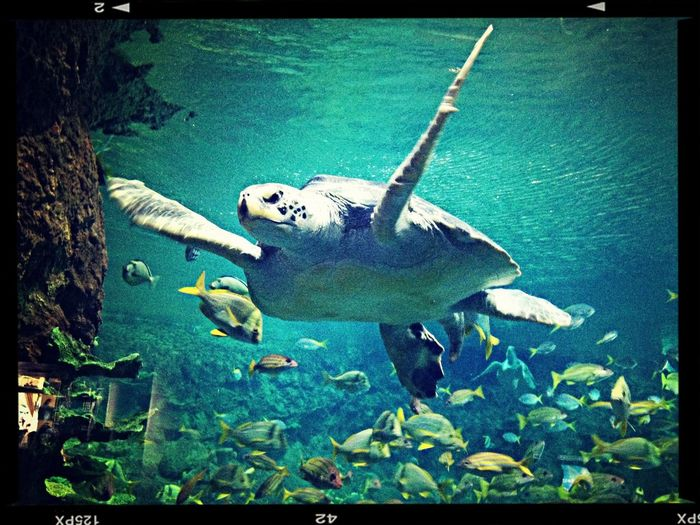 Sea turtle is preparing for take off. Seaturtle Marinelife Marineanimals AquaticLife First Eyeem Photo