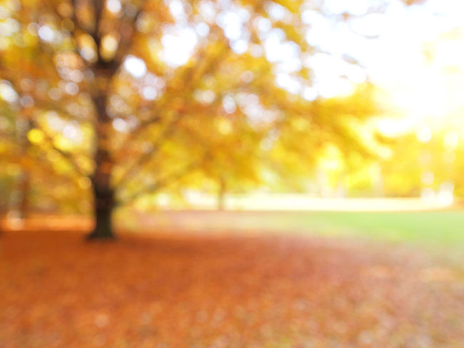 Autumn Backgrounds Beauty Beauty In Nature Berlin Close-up Day Defocused Environment Fine Art Photography Forest Freshness Landscape Leaf Light Effect Nature No People Outdoors Scenics Springtime Sunlight Tranquil Scene Tree Vibrant Color Wolskartin