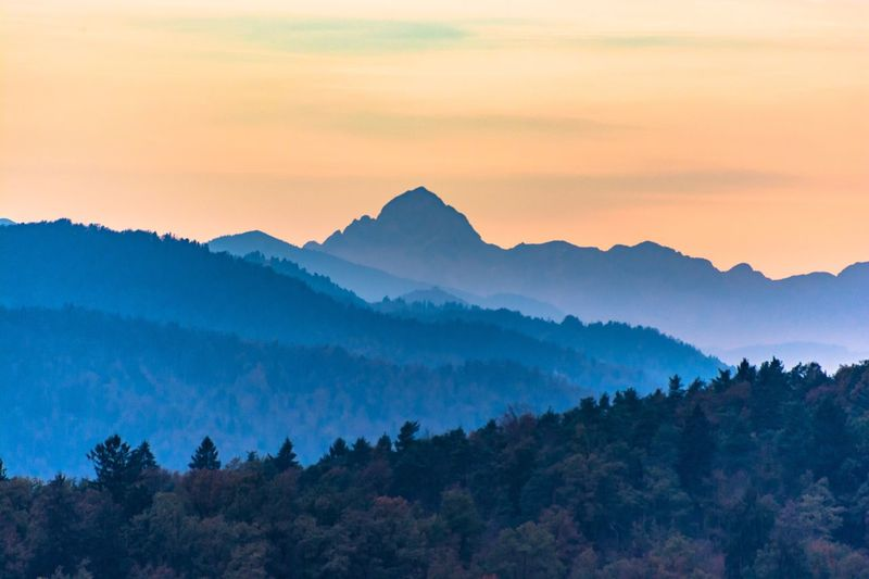 Mountain Tree Beauty In Nature Scenics - Nature Sky Mountain Range Environment Forest Tranquil Scene Land No People Nature Idyllic Pinaceae Sunset Pine Tree Coniferous Tree Plant Tranquility Landscape