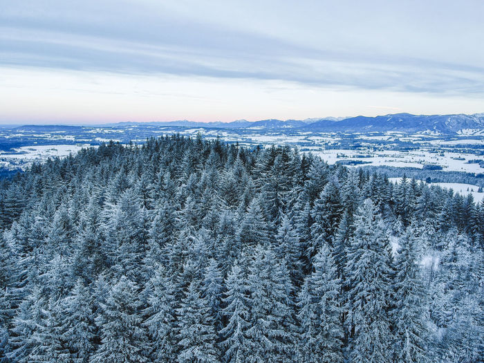 Winter Cold Temperature Snow Beauty In Nature Scenics - Nature Sky Tranquil Scene Tranquility No People Tree Nature Plant Environment Mountain Day Non-urban Scene Landscape Land Cloud - Sky Outdoors Pine Tree Snowcapped Mountain Coniferous Tree Dji Spark Spark Dji Drone  Dronephotography Drone Photography Aerial View Aerial Shot