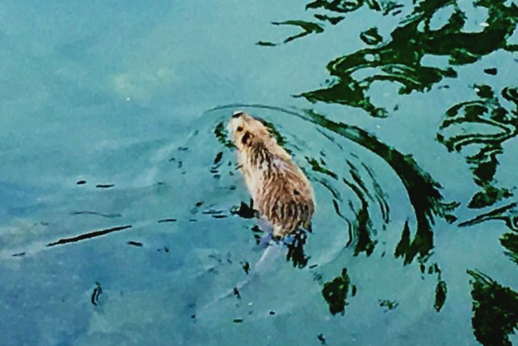 Animal Photography Warter Coipo Osaka,Japan Nopeople Eyemphotography IPhoneography Riverside EyeEm