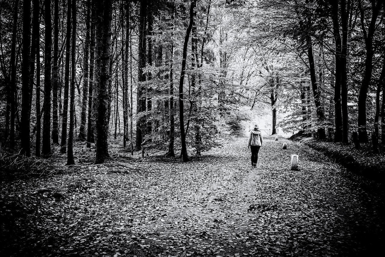 REAR VIEW OF MAN WALKING ON TREE IN FOREST