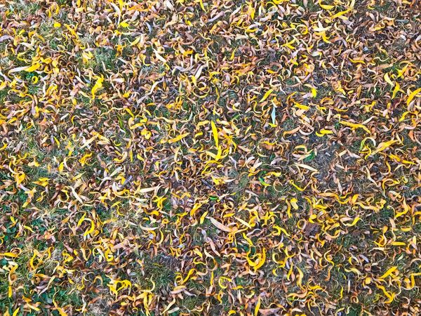Willow Willows Willow Leaves Textured  Textures And Surfaces Textures And Patterns Textures In Nature Backgrounds Organic Textures Texture_collection Patterns In Nature Pattern Nature Autumn Autumn Leaves Autum Texture Floortraits Fall Background Natural Pattern Large Group Of Objects Natural Texture Environment Change Autumn Colors