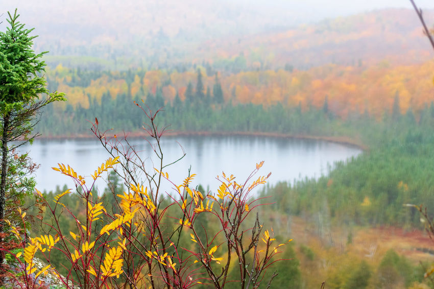 View of Oberg Lake from Oberg Mountain hiking trail on rainy fall day - natural background, peak colors and fog Beauty In Nature Tranquil Scene Scenics - Nature Autumn Change Outdoors Water Lake Nature Day Seasons Autumn Fall Rainy Day Vista Focus On Foreground Foggy Fall Colors Superior National Forest Superior Hiking Trail Oberg Mountain Natural Background Minnesota Woods