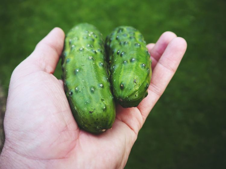 Cucumber Fresh On Eyeem  Freshness Green Green Color Hands Vegetables & Fruits Vegetarian Food Body Part Cucumber Plant Fruit Fruitporn Vegetable