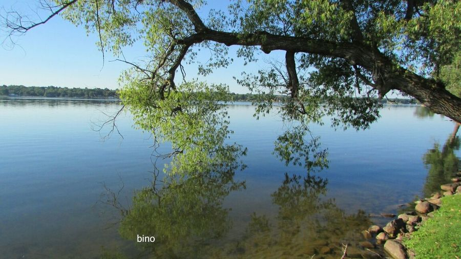 Afternòon Shoot Around The Lake Beautiful Summer Day Tranquil Scene No People Reflection Leaning Tree Lake Cadillac Pure Michigan