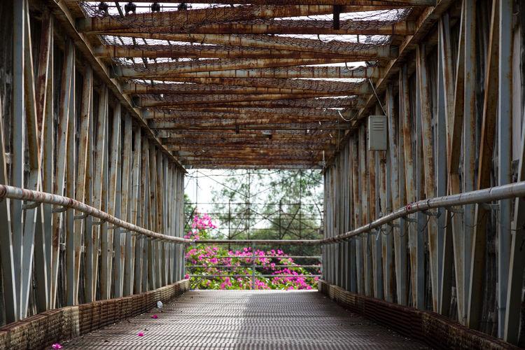 Empty footpath amidst flowering plants