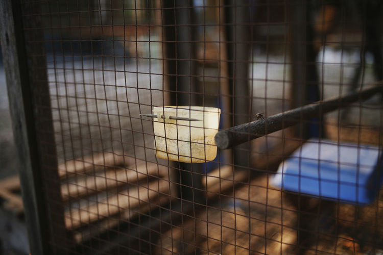 Cage Animals In Captivity Focus On Foreground Animal Themes No People Day Fence Livestock Boundary Close-up Pets Domestic Outdoors Herbivorous