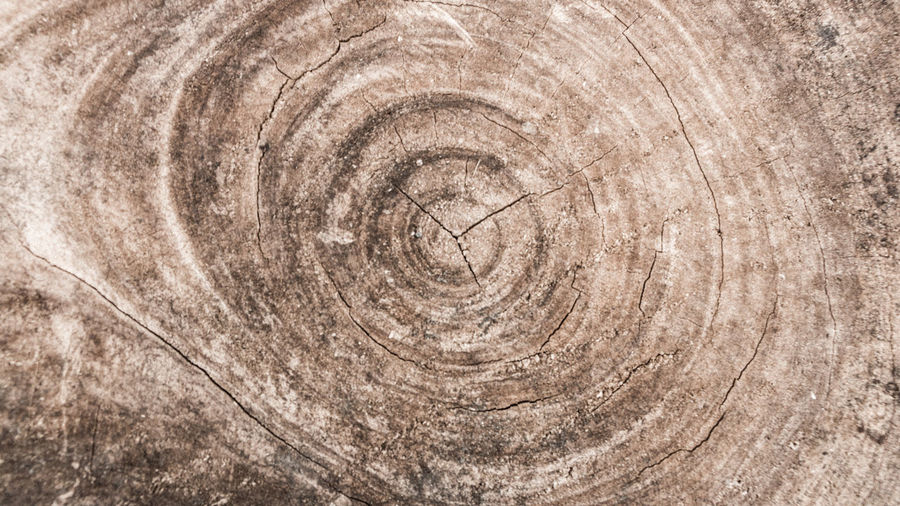 closeup abstarct wood surface, focus sective Abstract Backgrounds Blur Blurry Center Circle Close-up Core Creativity Cut Detail Flat Image Layer Log Natural Pattern Nature Pattern Plant Rough Round Selective Focus Shape Textured  Tree