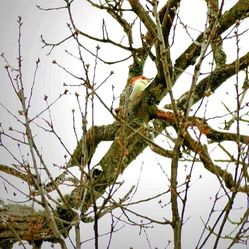 Wood Pecker Check This Out Nature Canonphotography
