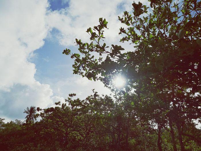 Sky Nature Cloud - Sky Outdoors