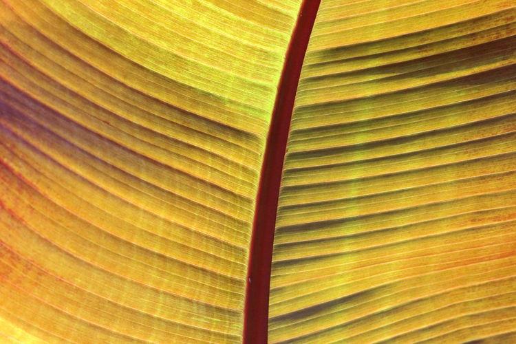 Full frame shot of palm leaf