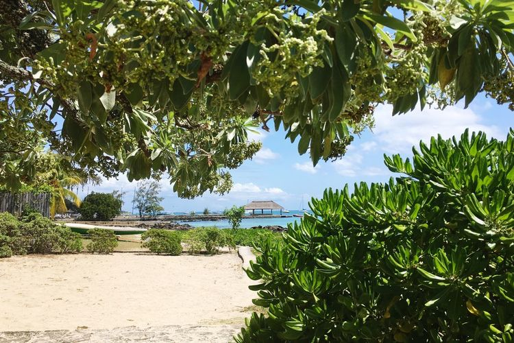 Look to the Pier Paradise Holiday Boatpier Summer Mauritius Tree Nature Beach Outdoors Day Palm Tree Leaf Travel Destinations Tranquil Scene Sea