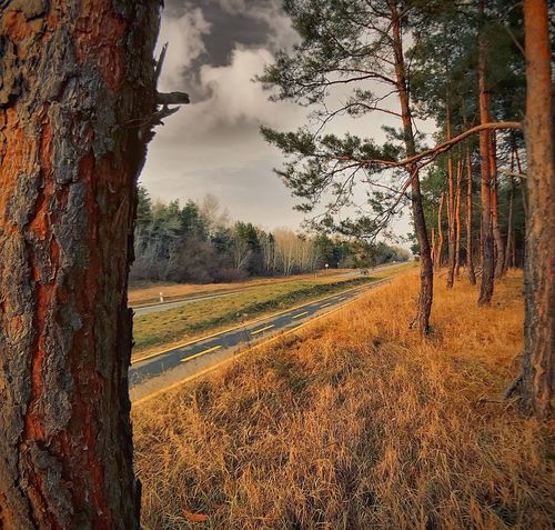 Tree Landscape Nature Field No People Sky Beauty In Nature Outdoors Day