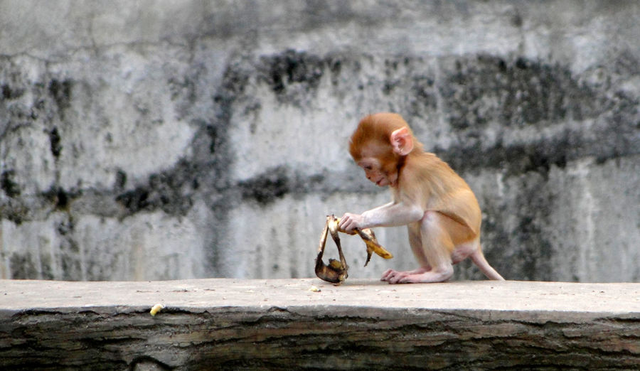 Side view of a baby monkey sitting on wood