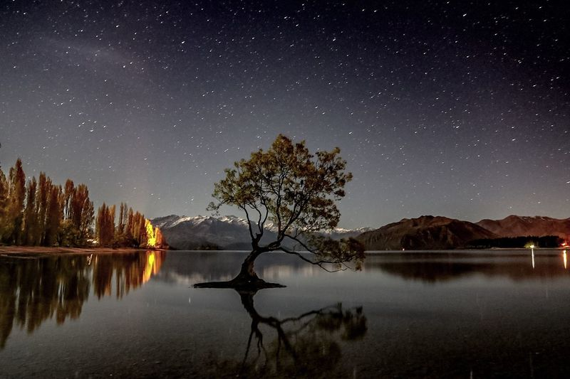 Tree growing amidst lake by snowcapped mountains against starry sky