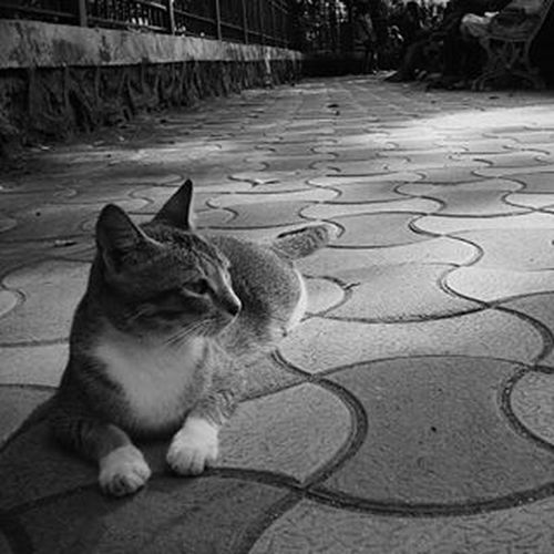 Cat lover...😘😘 Picoftheday Walkeshwar With Friends Fun Click Cat Pose An Evening Black &White Click Perspective Cheapcamerachallenge Cellphoneclicks Instafit GoodTimes Capture Love Awesome Followme On Instgram likemetylenovo