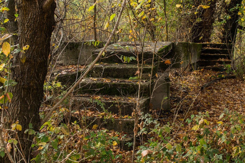 Stairway to autumn Forest Nature Tree No People Tranquility Leaf WoodLand Autumn Stairway Concrete Non-urban Scene Landscape Growth Fall Seasonal