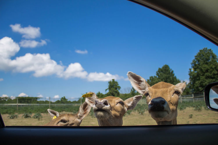 3 African Animal Themes Blue Canon Car Interior Clouds And Sky Country Road Countryside Day Deer Green Mode Of Transport Nature Photography Nature_collection Naturelovers No People Outdoors Photography Safari Sandusky Sky Sky And Clouds Transportation Upclose