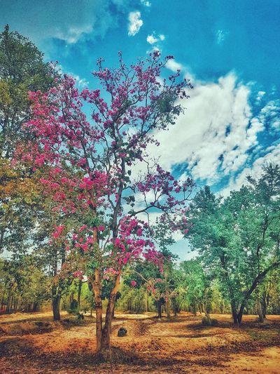 Flowering trees on field against sky